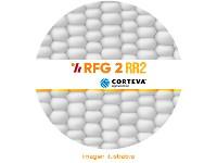 Maiz RFG2 (Refugio RR2) x bolsa 80.000 sem.